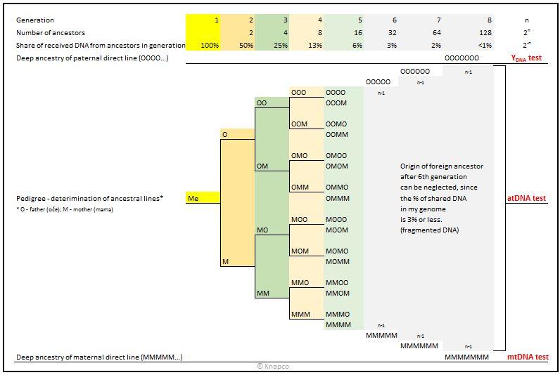 Personal pedigree Chart