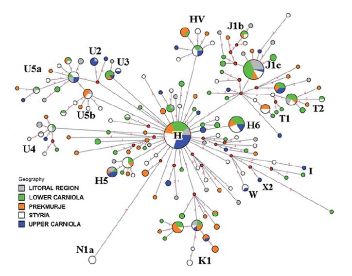 Slov-mtDNA-chart