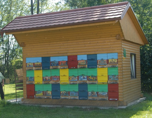 A pioneer of modern apiculture is Slovenian